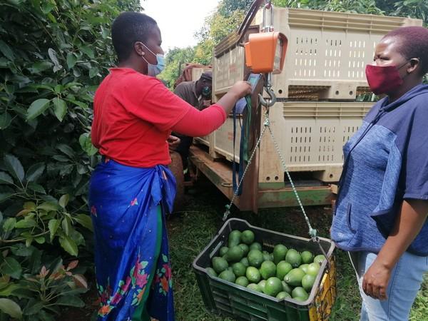 Farm Management Simplified labour - Farm Costing Solutions